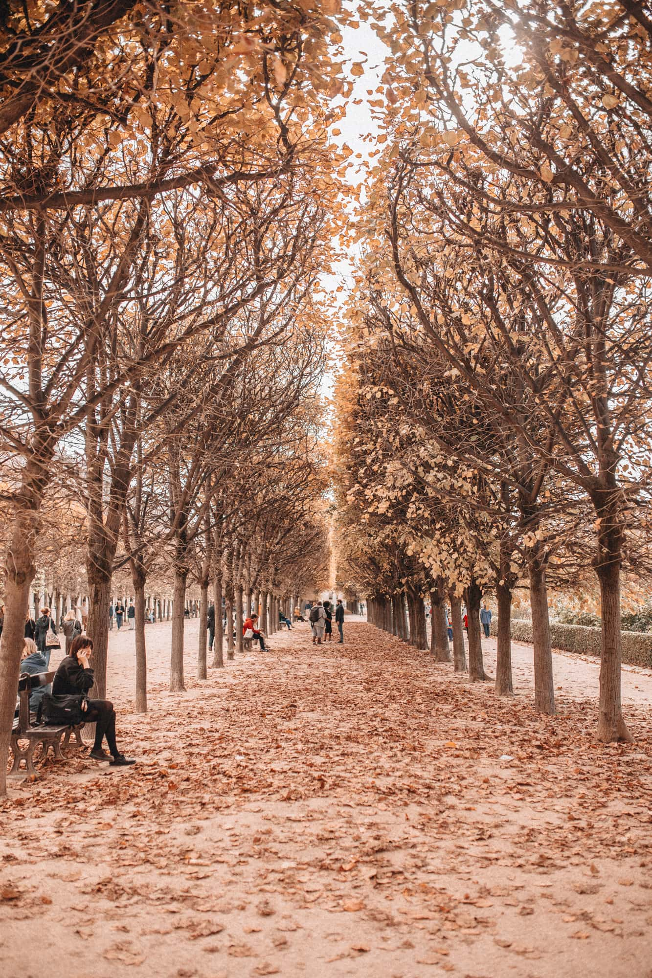 Palais Royal gardens under fall trees