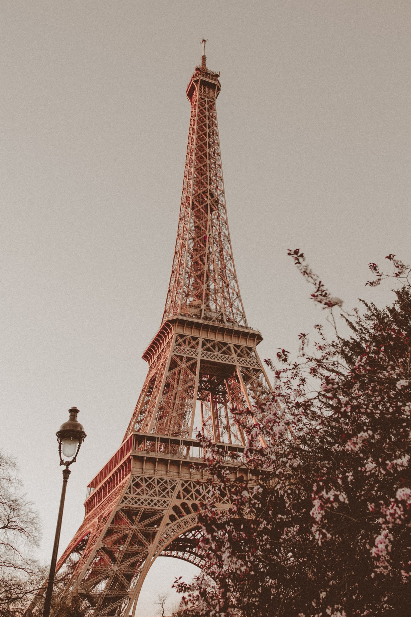 Eiffel Tower in the spring at sunset