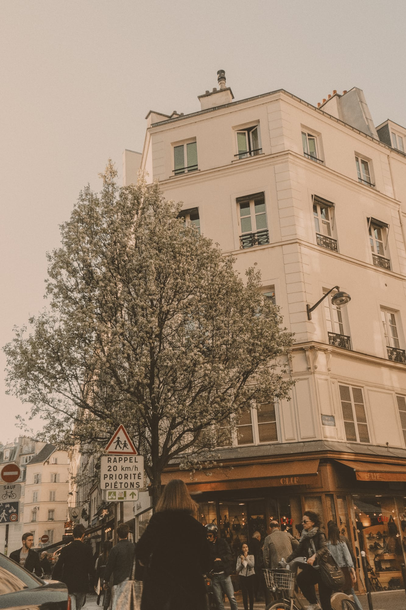 spring blossoms, Paris streets