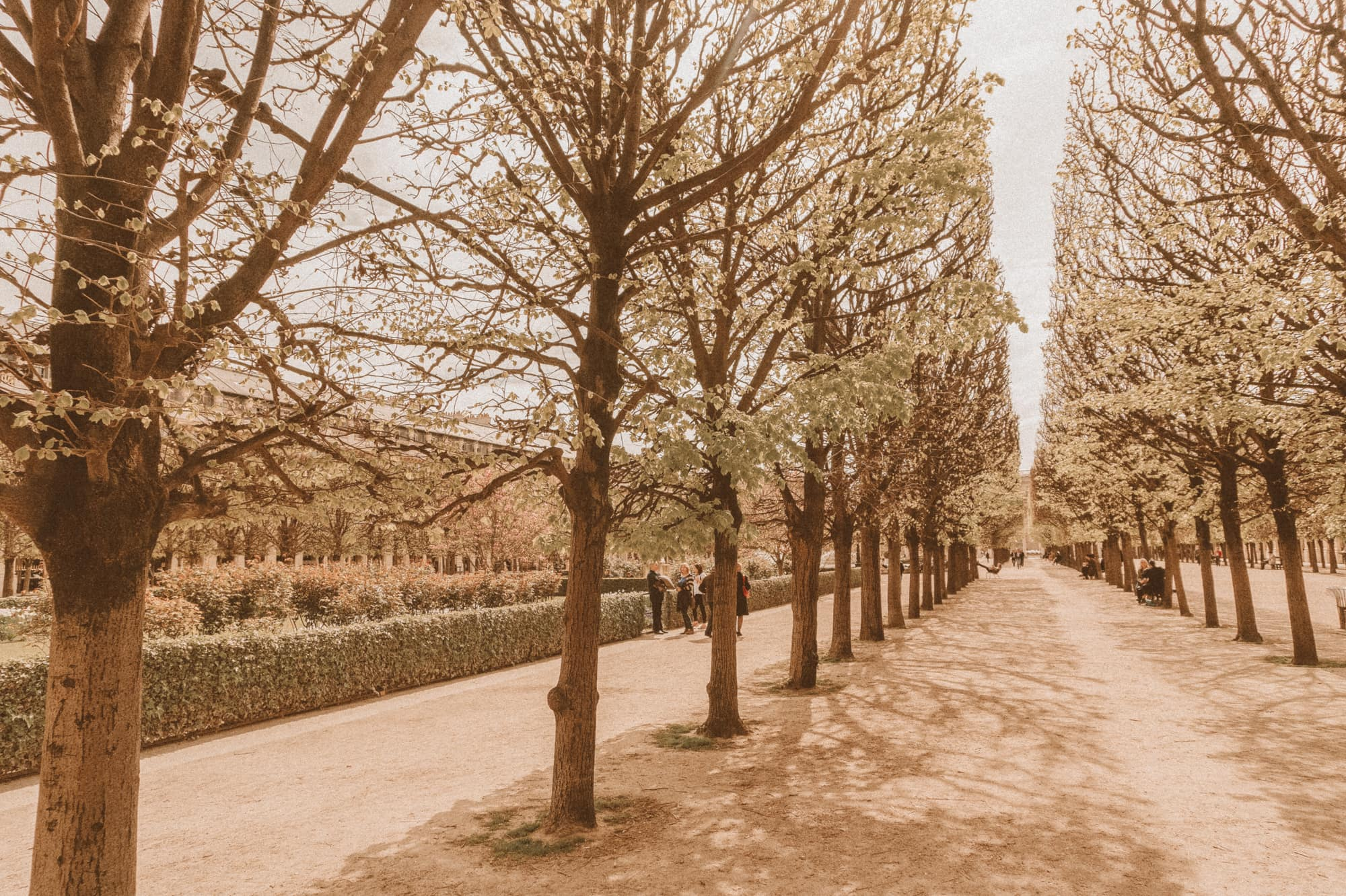 spring leaves at Palais Royal Paris