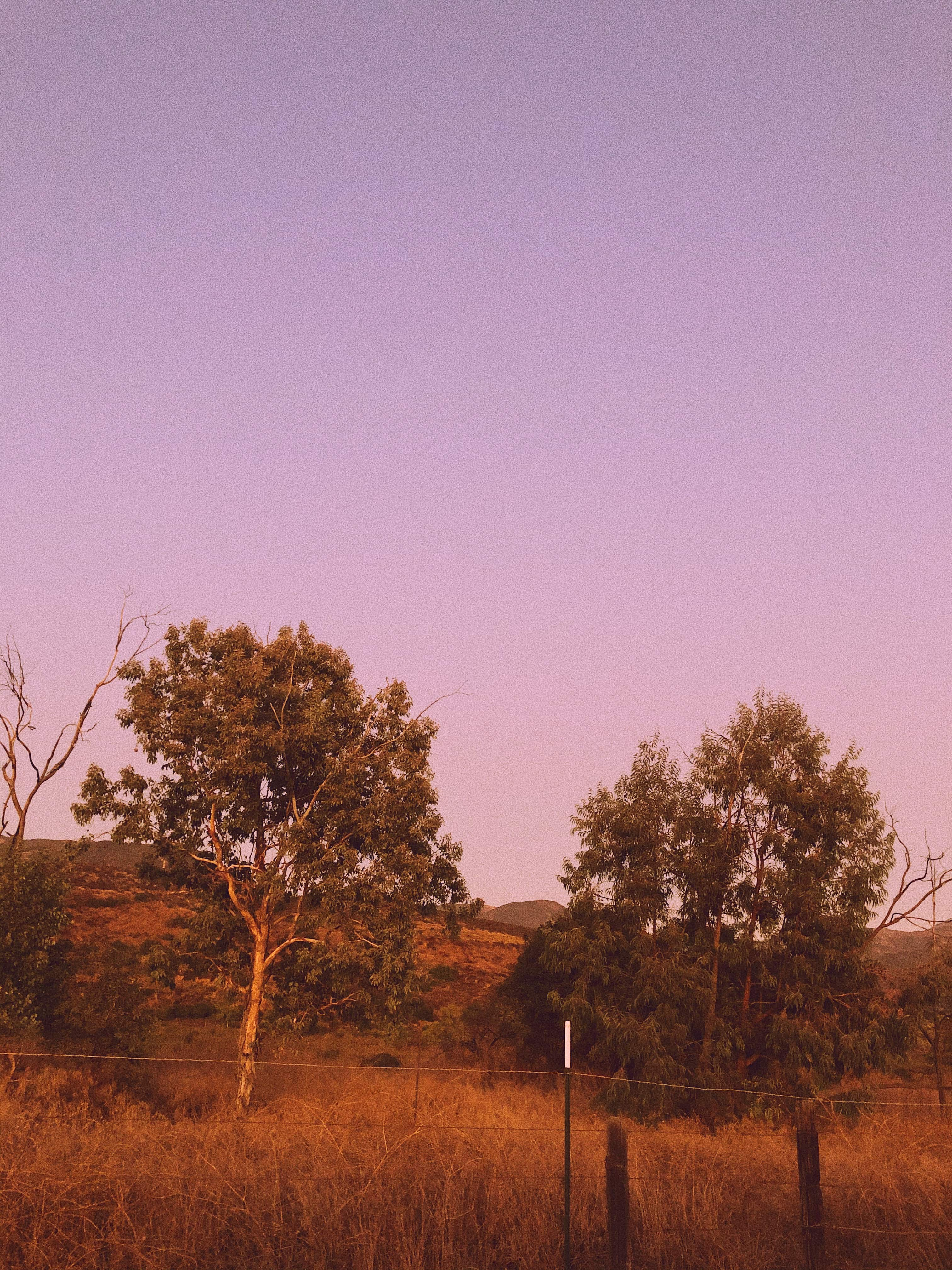 lavender skies at sunset in canyon